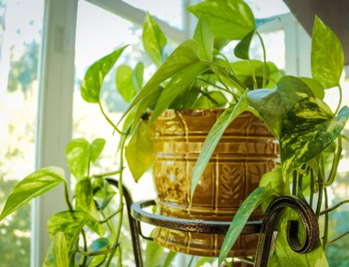 Feng Shui. Doce plantas recomendadas